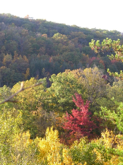 The tree tops of north East Pa. The colors are coming in.