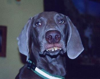 redneck_pics_dog